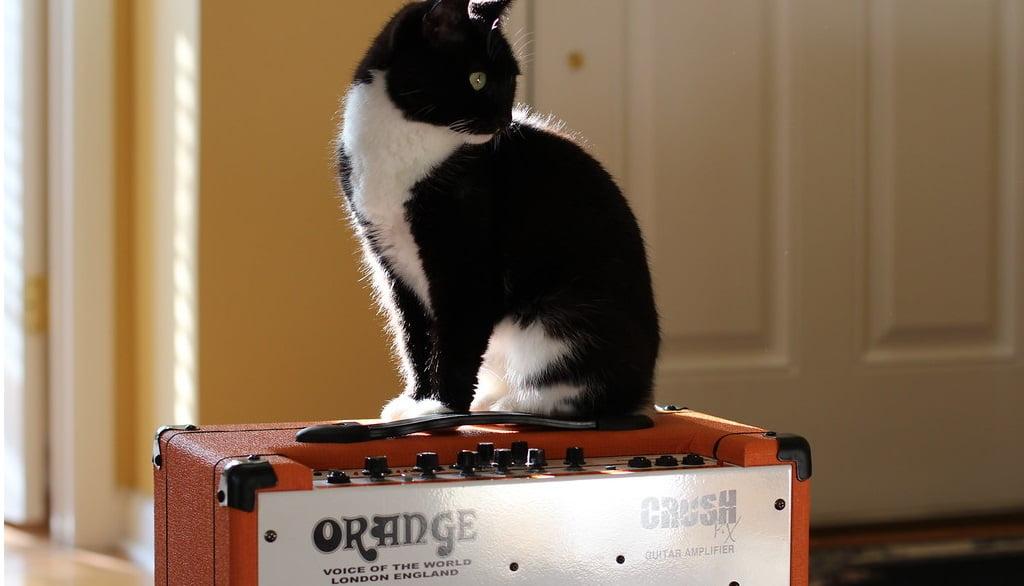 Orange Amp with a Cat